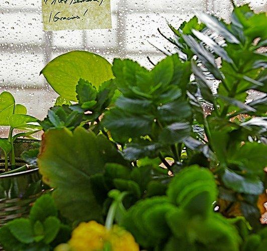 exceso de agua en plantas